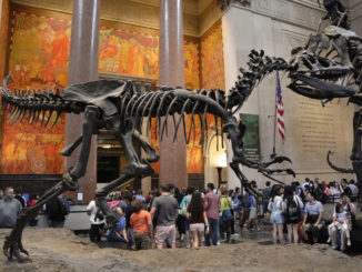 A shot of a crowd gathering underneath a dinosaur exhibit - American Museum of Natural History -